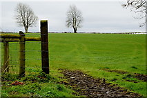 H6058 : Posts at the end of a field, Tullylinton by Kenneth  Allen