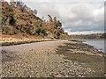 NH6851 : Shoreline below Craigiehowe by valenta