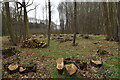 TM2036 : Recently coppiced woodland at Rence Park by Simon Mortimer