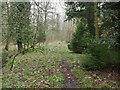 TL8193 : Faint path North of Lynford Lakes by David Pashley