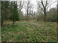 TL8193 : Scrubby area North of Lynford Lakes by David Pashley
