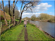 SJ6374 : Footpath at Barnton Cut, River Weaver Navigation by Gary Rogers