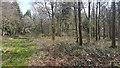 SU6029 : Deer shooting platform in Cheriton Wood by Peter Facey