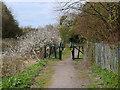 SJ5394 : Sutton Brook Greenway by David Dixon