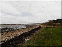 NH7149 : Shore at Alturlie Point by Douglas Nelson