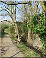 TL4856 : Snakey Path and Cherry Hinton Brook by John Sutton