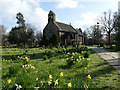 SE2740 : Daffodils in St John's churchyard, Adel by Stephen Craven