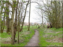 SD7603 : Path Through Woodland at Clifton Moss by Gary Rogers