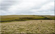 SD8965 : Extensive grazing land south of Malham Tarn by Trevor Littlewood