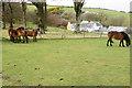 SS7649 : Exmoor ponies by Kipscombe Farm by Bill Boaden