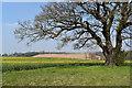 TM1640 : Parkland tree near Redgate Lane by Simon Mortimer