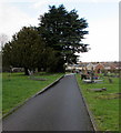 ST2896 : Evergreen trees in Holy Trinity churchyard, Cwmbran by Jaggery