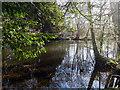 TL8193 : Lynford lakes by David Pashley