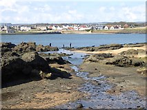 NT4999 : Beach at Elie Ness by Oliver Dixon