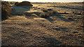 SY9484 : Frosty morning, Middlebere Heath by Derek Harper