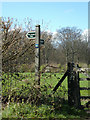 TM4899 : Footpath signpost off Market Lane by Adrian Cable