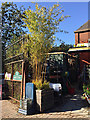 TQ3370 : Bamboo at the garden centre gate, Coxwell Road, Upper Norwood by Robin Stott