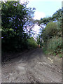 TM4796 : Footpath to Slugs Lane by Adrian Cable