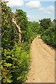 SX7977 : Under Lane, Lower Brimley by Derek Harper