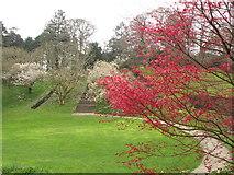 SX7962 : Dartington Hall: steps up Heath Bank, magnolia, maple by David Hawgood