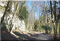 TA0125 : Chalk Cliffs, Humber Bridge Country Park by Des Blenkinsopp
