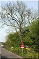 SX8858 : For sale signs, Grange Road, Goodrington by Derek Harper