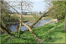 H4473 : Fallen trees along the Strule River by Kenneth  Allen
