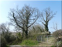 SX8390 : Bare trees by a gate near Rughouse by David Smith