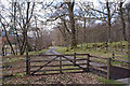 NN5028 : Cattle grid in the woods by Richard Dorrell