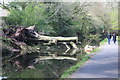 ST2896 : Reflection of tree in canal, Pontnweydd by M J Roscoe