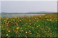 NF7666 : Floral machair by Malcolm Neal