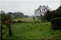 H4277 : An open field, Mountjoy Forest West Division by Kenneth  Allen