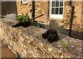 SW6527 : Black Cats by Chris Thomas-Atkin