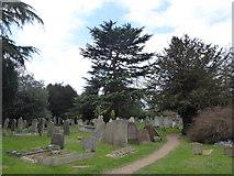 TQ1667 : St Nicholas, Thames Ditton: churchyard (a) by Basher Eyre
