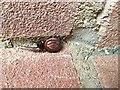 TQ2995 : False Widow Spider by Christine Matthews