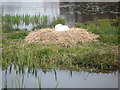 SO6263 : Swan on a nest at the River in Kyre Park Gardens by Fabian Musto