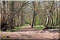 NT2440 : Woodland path near the Tweed, Peebles by Jim Barton