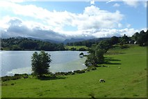 NY3404 : Shore of Loughrigg Tarn by DS Pugh