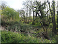 TL8094 : Scrubby area beside River Wissey by David Pashley