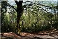 H1859 : Woodland, Bunaninver by Kenneth  Allen