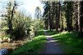 H1860 : Woodland path, Bunaninver by Kenneth  Allen