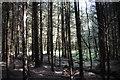SD7456 : Gisburn Forest by John Tomlinson