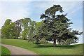 SP4317 : Parkland Trees, Blenheim by Des Blenkinsopp