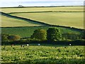 SW9948 : Pasture, St Ewe by Andrew Smith