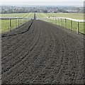 TL6563 : Looking down the gallops on Warren Hill, Newmarket by Richard Humphrey