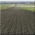 TL6563 : View down a Polytrack gallop on Warren Hill in Newmarket by Richard Humphrey
