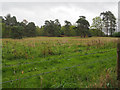 TL8295 : Looking across rough grassland towards military road by David Pashley