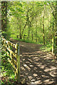 SX7873 : Bridleway into Goodstone Woods by Derek Harper