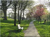 NZ3955 : Spring colour in Backhouse Park, Sunderland by Malc McDonald