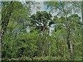 TQ2434 : Buchan Country Park by PAUL FARMER